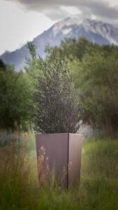 COOKE Planter2